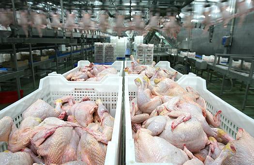 В Ставропольском крае наращивают экспорт мяса птицы