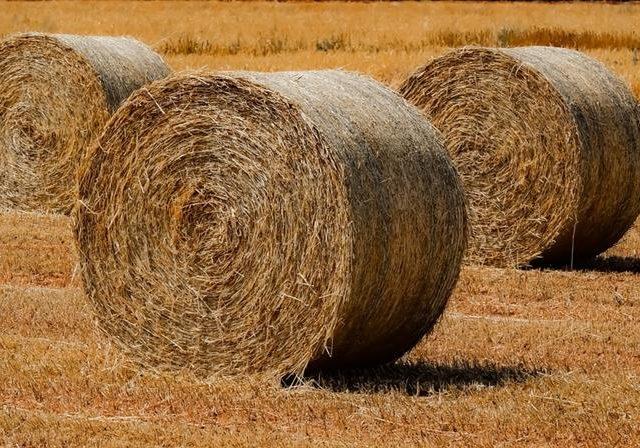 В Кабардино-Балкарии идет заготовка кормов